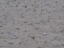 Shells in het zand bij het strand Stock Foto's