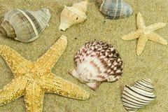 Shells II Stockfotografie