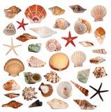 Shells inzameling Stock Afbeeldingen