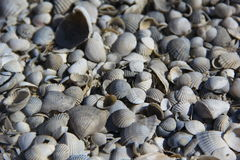 Shells on the island Royalty Free Stock Photography