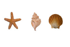 Shells isolated Stock Images