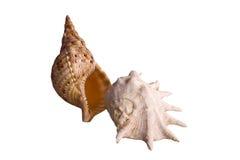 Shells isoleerden 2 Stock Fotografie
