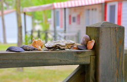Shells kampeervakantie Stock Foto