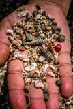 shells LA BEAUTÉ D'UNE MER photo libre de droits