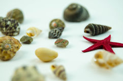 Shells in large quantities Stock Photos