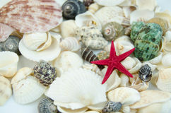 Shells in large quantities Royalty Free Stock Photography