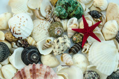 Shells in large quantities Royalty Free Stock Image
