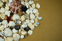 Shells in large quantities Royalty Free Stock Photo