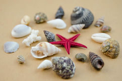 Shells in large quantities Stock Photo