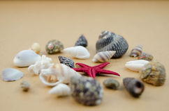 Shells in large quantities Royalty Free Stock Photos