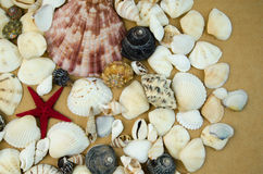 Shells in large quantities Stock Image