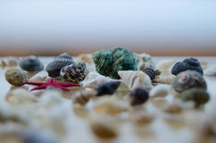Shells in large quantities Stock Photography