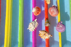 Shells lie on a  colorful background. Royalty Free Stock Photography