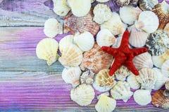 Shells liggen op een kleurrijke achtergrond stock foto