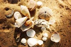 Shells liggen op het zand op het strand met stenen wordt gestrooid, een verlovingsring in het zand - een gift en een verrassing d Stock Foto's