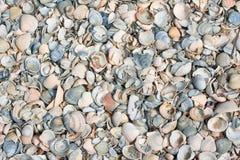 Shells like background Stock Photos