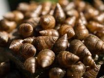 shells litet Fotografering för Bildbyråer