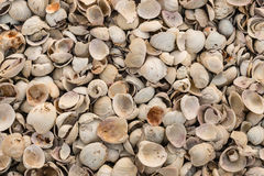 Shells lying on beach Stock Photography