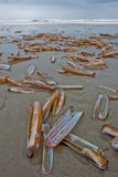 Shells lying on the beach surf of the ocean Stock Image