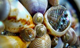 Shells. Macro Photo of different kinds of shells Royalty Free Stock Photography
