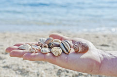 Shells in man's palm Royalty Free Stock Images