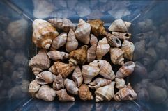 Shells of many sizes. Close-up view of seashells in the box. Top view, marine concept stock photography