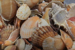 Shells of many types and sizes Stock Photos