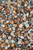 Shells of many types and sizes on the beach. Top view royalty free stock photos