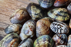 Shells of many types and sizes Royalty Free Stock Photos