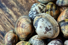 Shells of many types and sizes Royalty Free Stock Image