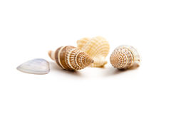 Shells of marine crustaceans Stock Images