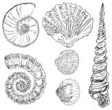 Shells of marine fauna. Vector illustration of prehistoric life forms. Drawings are made by hand Stock Photos