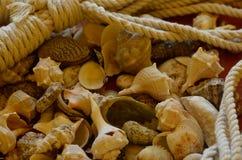 Shells met kabels Stock Afbeelding