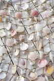 Shells. Mixed marine sea shells in fishing net at wall Stock Photography