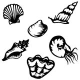 Shells and mollusks Stock Photos
