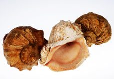 Shells of molyuskov. Dwellings in the pool of the Black sea Royalty Free Stock Images