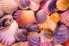 Shells Mosaic Royalty Free Stock Photography