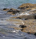 Shells and mussels on the rocks by the sea Royalty Free Stock Photo