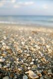 Shells n Materiaal Stock Fotografie