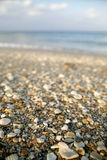 Shells n Stuff. Shell filled shoreline on a Florida beach Stock Photography