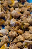 Shells. Natural fresh shells in a market. Food in markets royalty free stock images