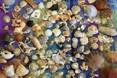 Shells from the Ocean. Sea shells laid out on a towel Stock Photos