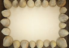 Shells and old paper vintage and have copy space. Shells and old paper vintage and have copy space for design in your work royalty free stock photo