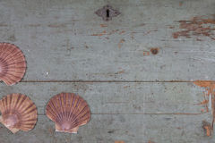 Shells on old wooden top Royalty Free Stock Image