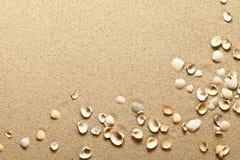 Shells On Sand Royalty Free Stock Photo