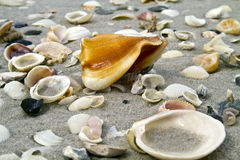 Free Shells On The Beach Stock Photography - 13282872
