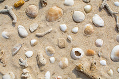 Free Shells On The Sand Beach Stock Images - 69753534