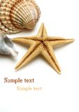 Shells On White Royalty Free Stock Images