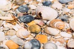 Shells onder het overzees door het overzees, Stock Foto's