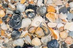 Shells onder het overzees door het overzees, Stock Afbeeldingen